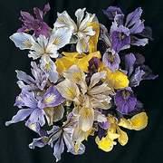 Iris_pacific_coast_hybrids